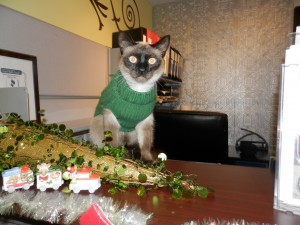 Our little Grinch in green then decided to redecorate the tree...